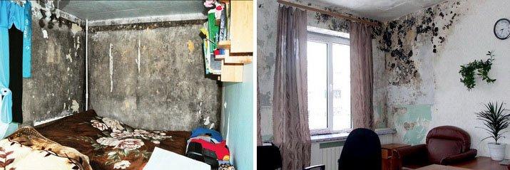 Плесень на стенах и мокрая комната