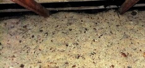На перекрытии в курятнике можно насыпать древесную стружку