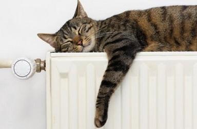Кот греется на газовом отоплении