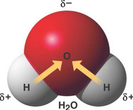 Из молекулы воды выделяется водород